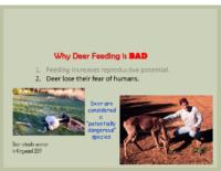 Slide 10_Englewood Present Deer Mgmt june2019