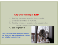 Slide 12_Englewood Present Deer Mgmt june2019