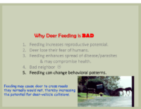 Slide 13_Englewood Present Deer Mgmt june2019