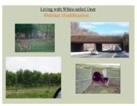 Slide 26_Englewood Present Deer Mgmt june2019